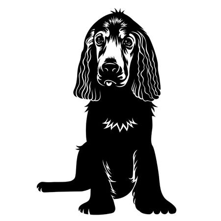 798 Cocker Spaniel Stock Illustrations, Cliparts And Royalty Free.