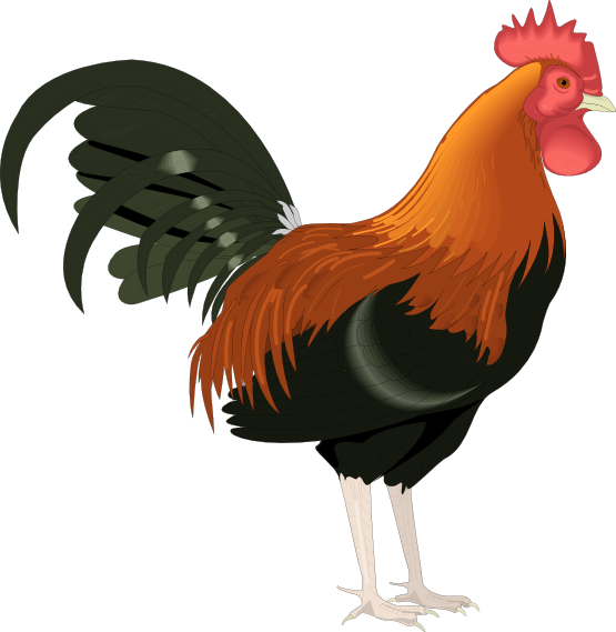 Rooster Clip Art Cartoon Free.