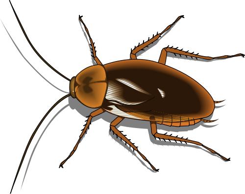 Cockroach Clip Art Free.
