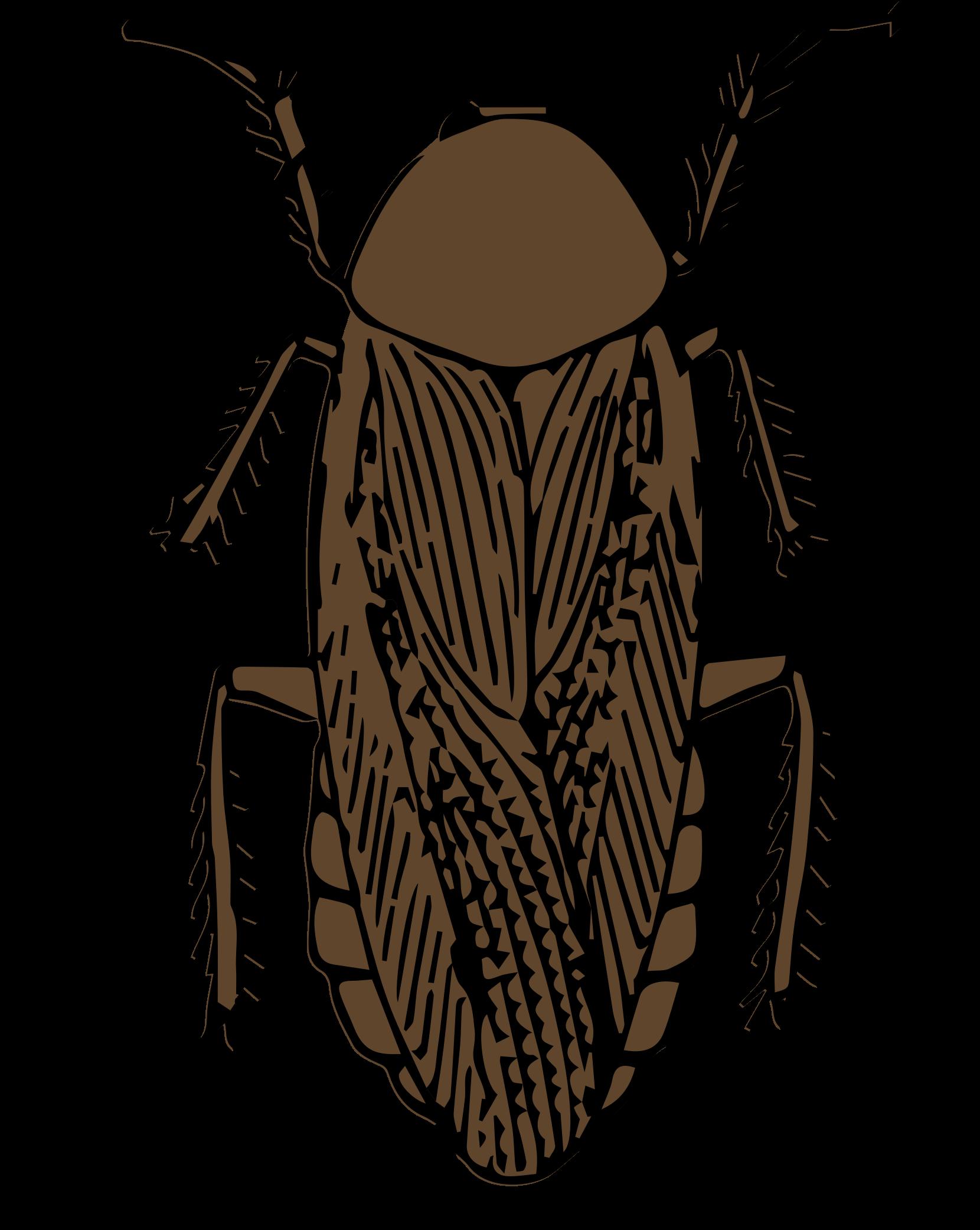 Clipart cockroach color.