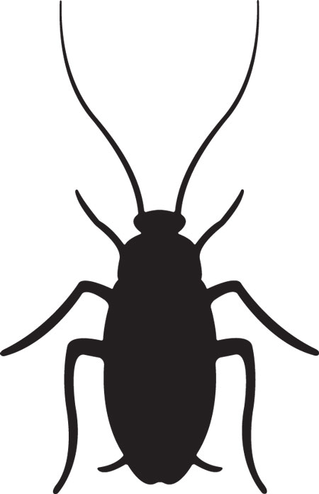 Cockroaches Clipart.