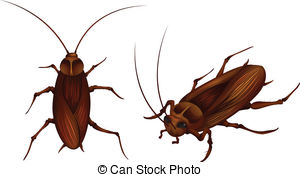 Cockroach Illustrations and Clip Art. 1,703 Cockroach royalty free.