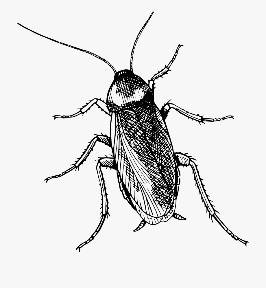 Beetle Transparent Top View.