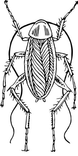 Download black and white of cockroach clipart Cockroach Clip art.