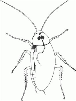 Free Cockroach Cliparts, Download Free Clip Art, Free Clip Art on.