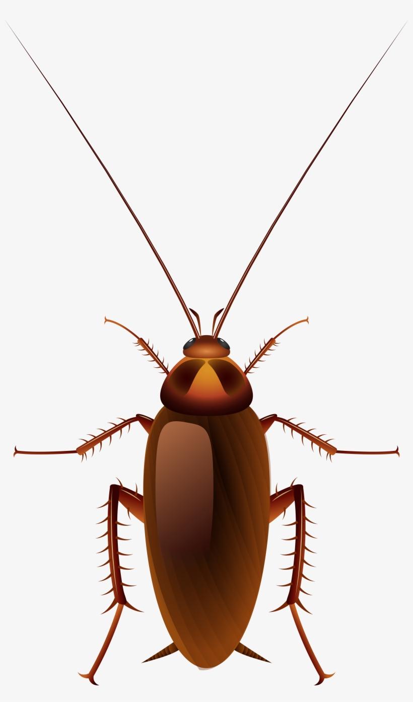 Cockroach Png Clip Art.