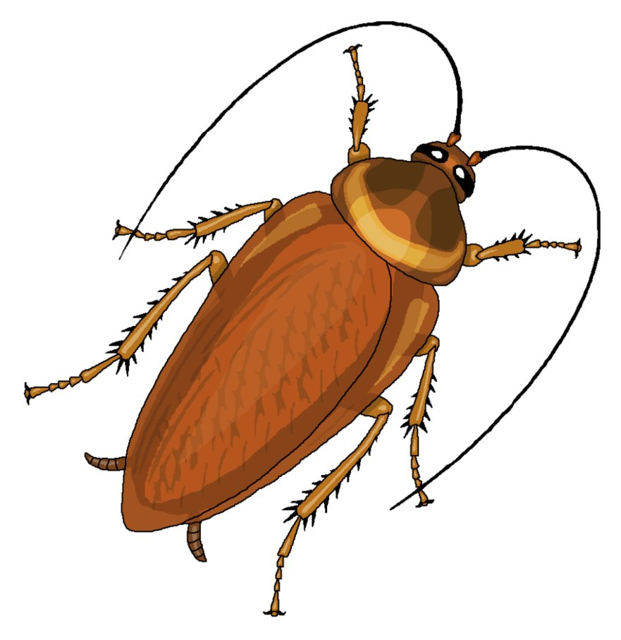 Cockroach clipart png 3 » PNG Image.