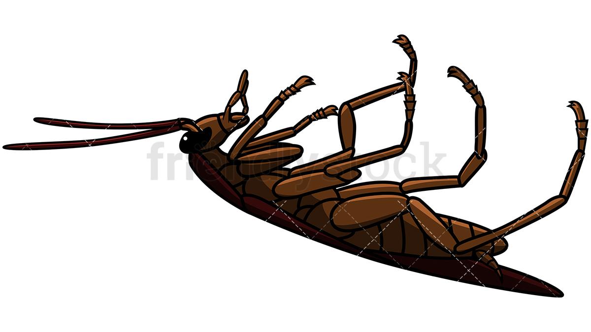 Dead Cockroach Side View.