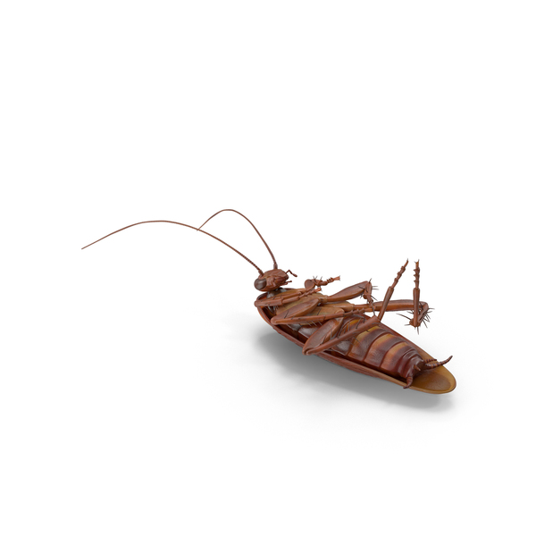Dead Cockroach PNG Images & PSDs for Download.
