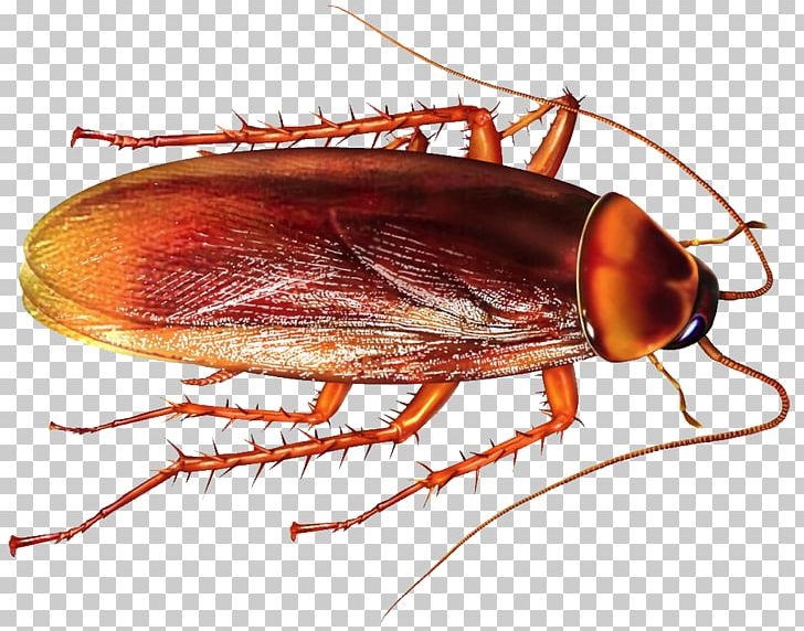Cockroach Insect Rat Pest Control Mosquito PNG, Clipart, Animal.