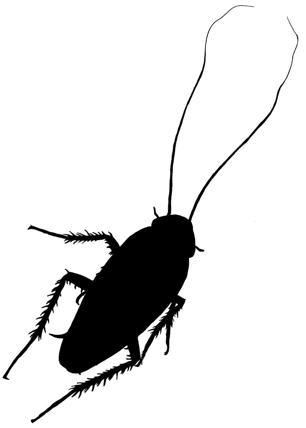 Cockroach Clipart.