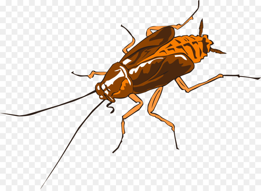 Cockroach Cartoontransparent png image & clipart free download.