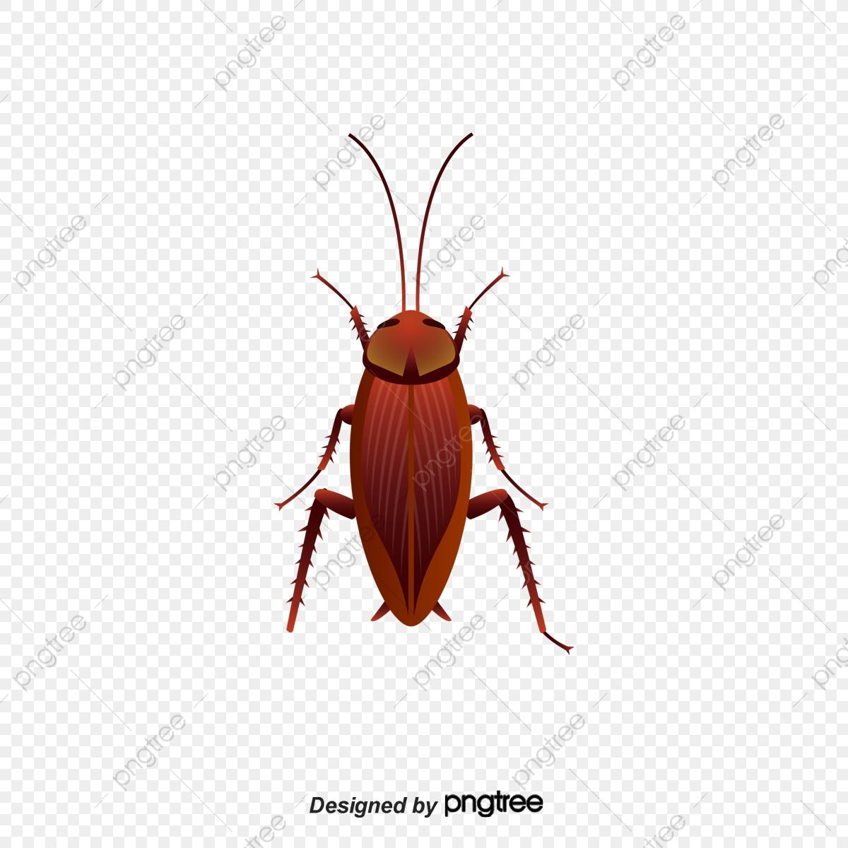 Vector Cartoon Hand Painted Red Back Cockroach, Cartoon Vector, Hand.