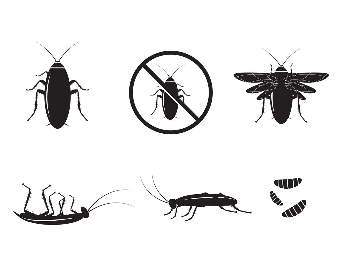 Cockroach Silhouette Vector Vector Art & Graphics.