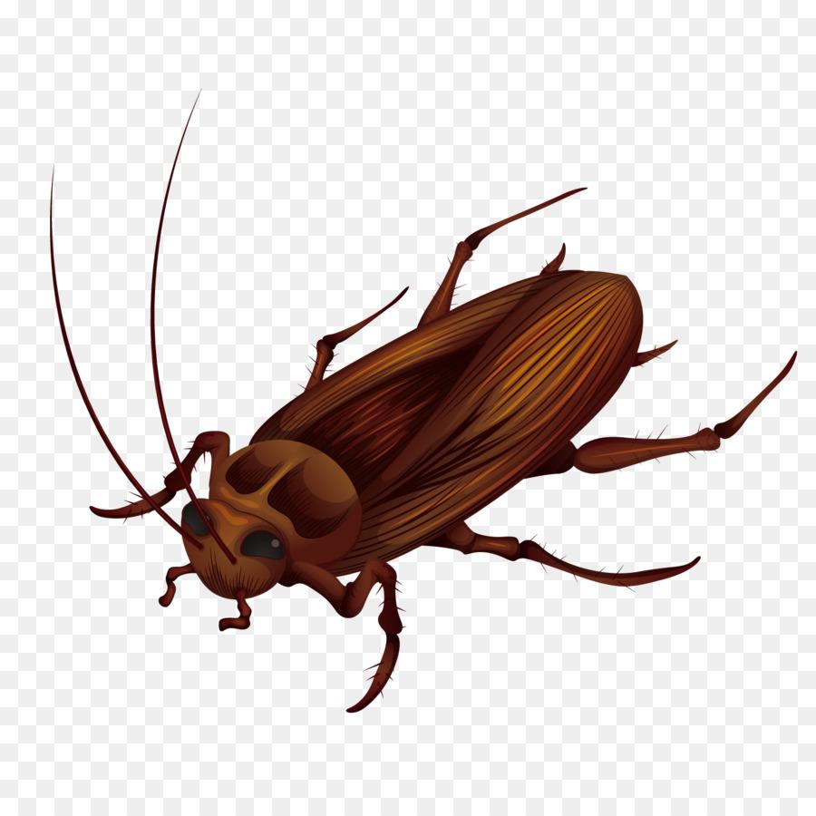 Cockroach Cartoon png download.