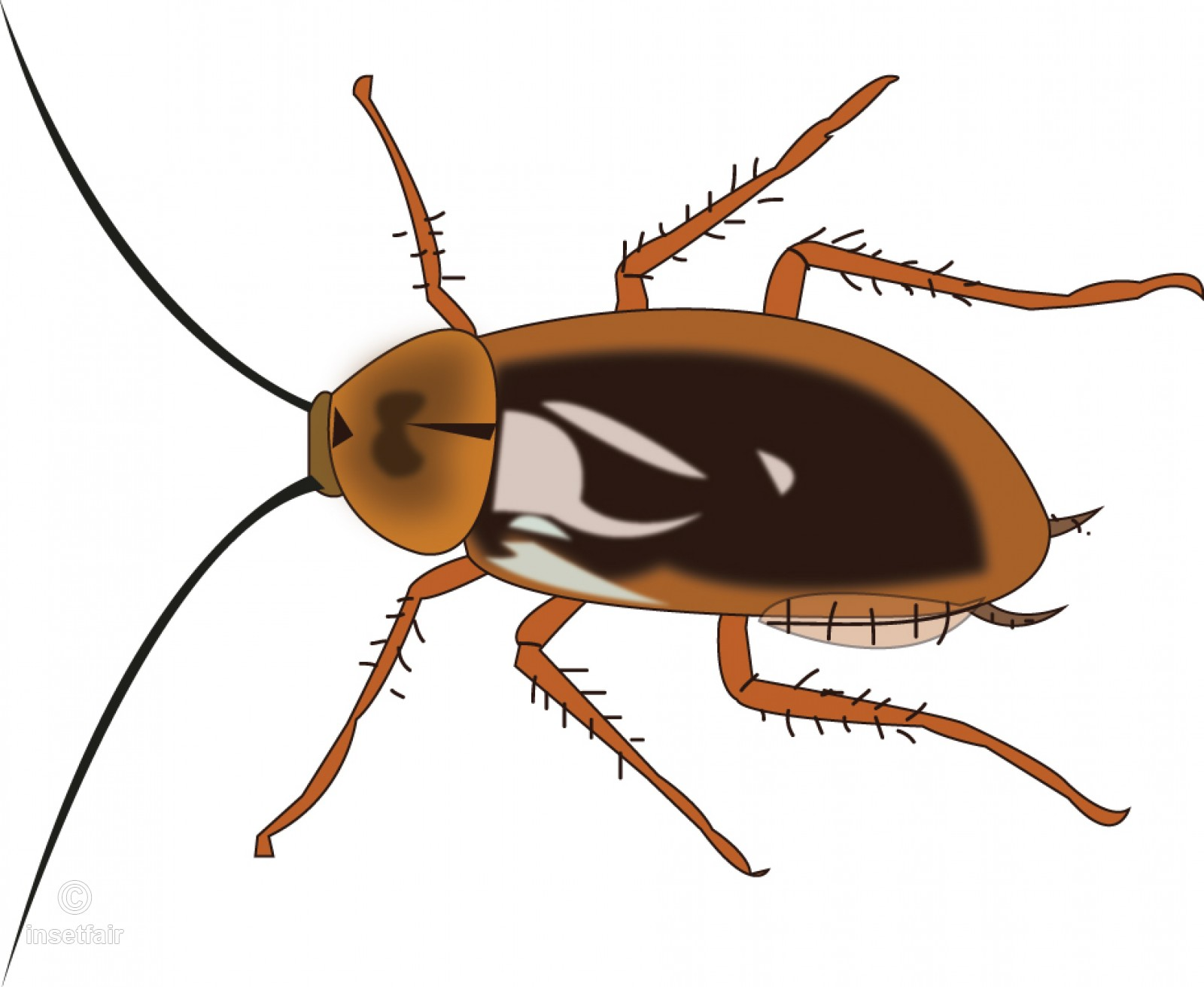 Cockroach insect vector illustration for free download.