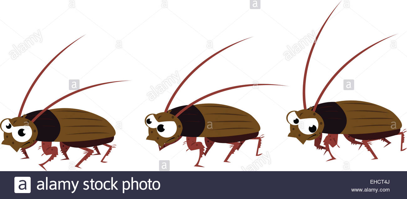 Funny Cockroach Walking Stock Photo, Royalty Free Image: 79572994.
