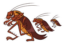 Funny Cockroach Walking Royalty Free Stock Image.