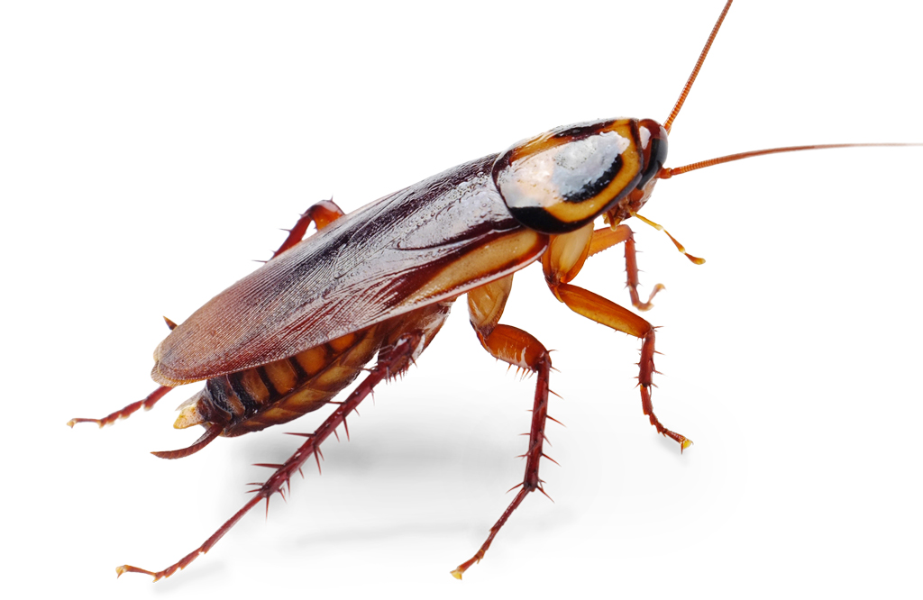 1000+ images about Cockroaches !! on Pinterest.