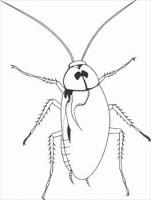 Free Cockroaches Clipart.