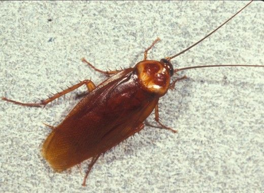 1000+ ideas about Killing Roaches on Pinterest.