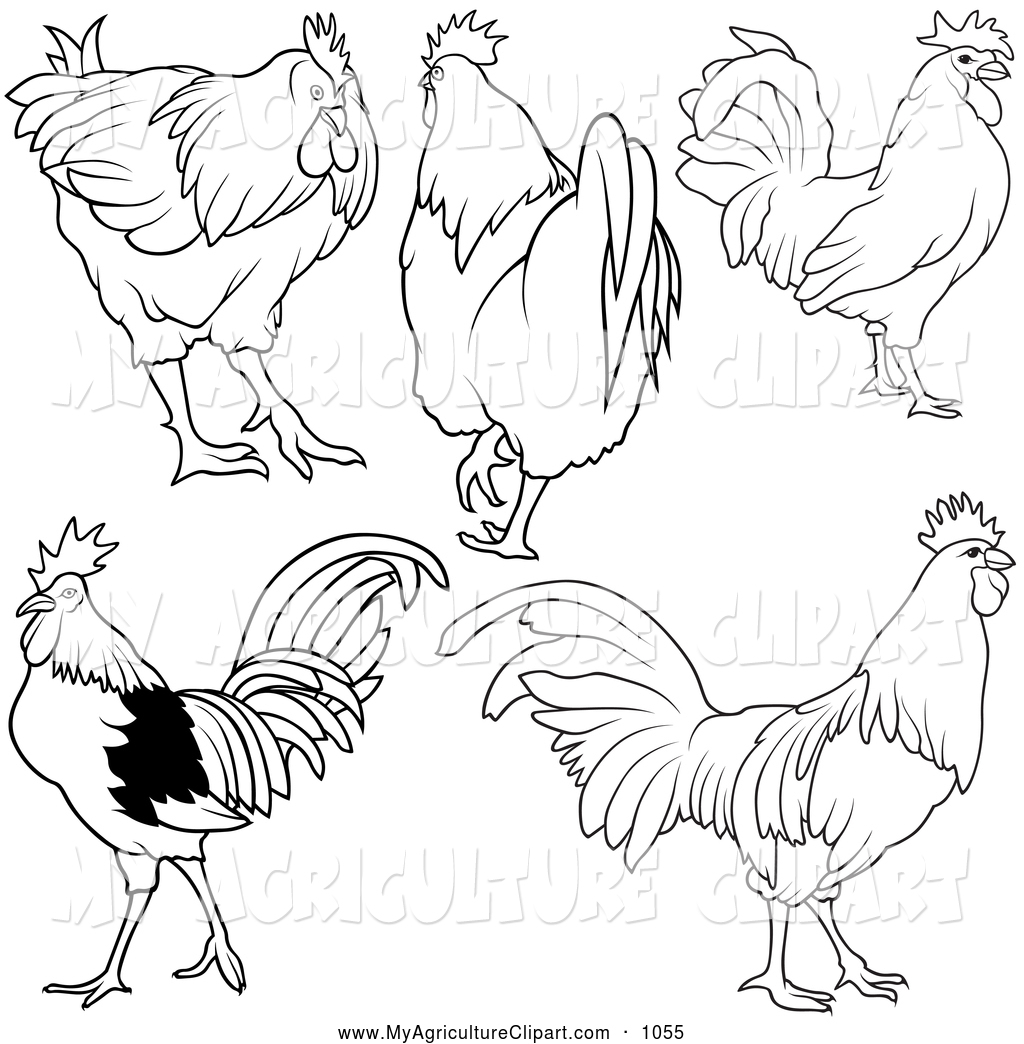 Vector Agriculture Clipart of a Coloring Page of Rooster Outlines.