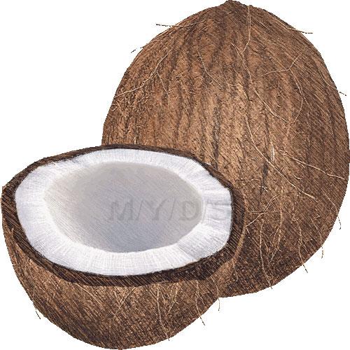 Coco clipart.