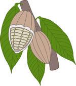 Cocoa Beans Clip Art.