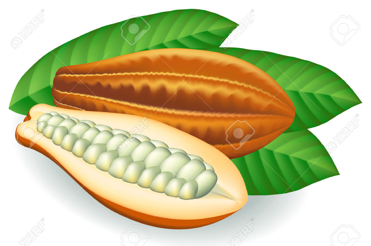 Cocoa Beans. Royalty Free Cliparts, Vectors, And Stock.