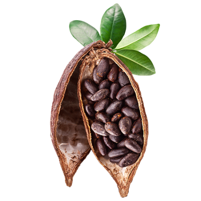Download Free png Cocoa PNG File.