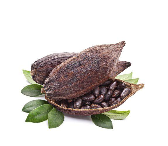 Cocoa Beans Transparent PNG.
