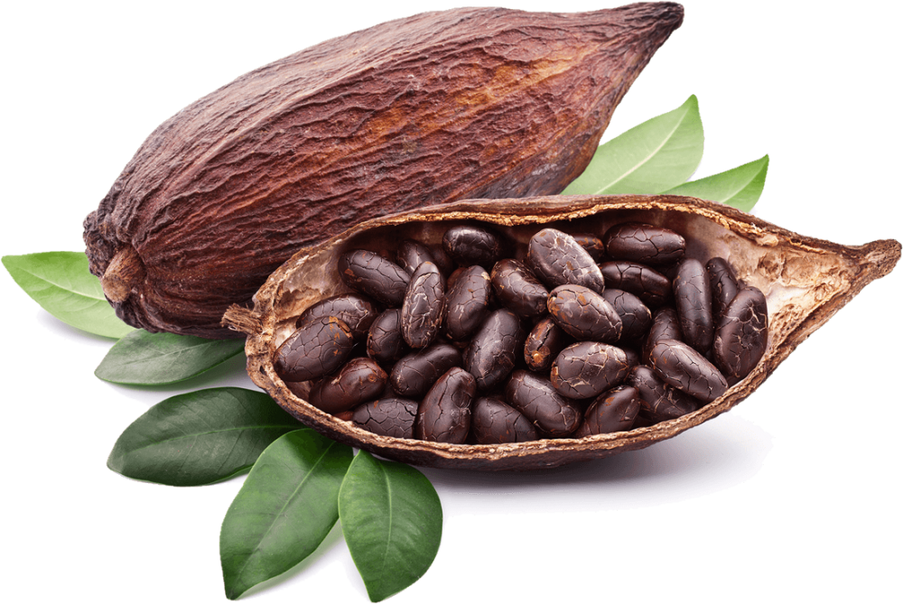 Download Cocoa PNG Photos 105.