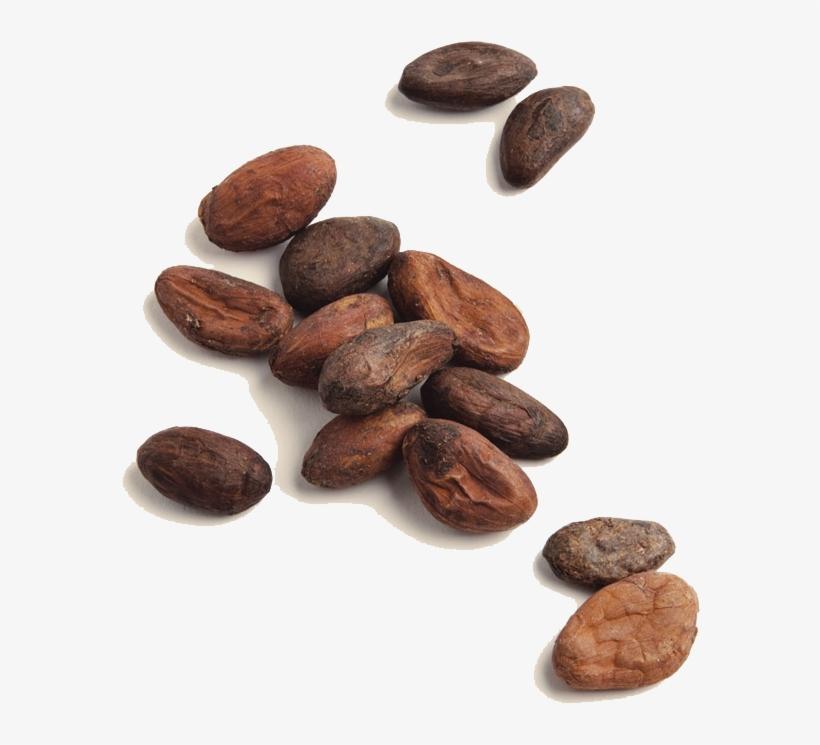 Moner Cocoa.