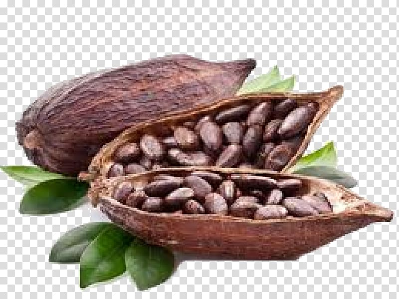 Seeds inside nut shell, Cocoa bean Cocoa solids Hot chocolate.