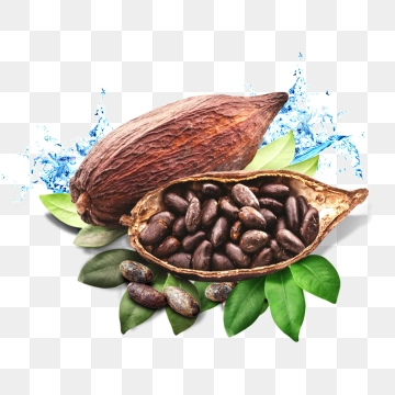 Cocoa Png, Vector, PSD, and Clipart With Transparent Background for.