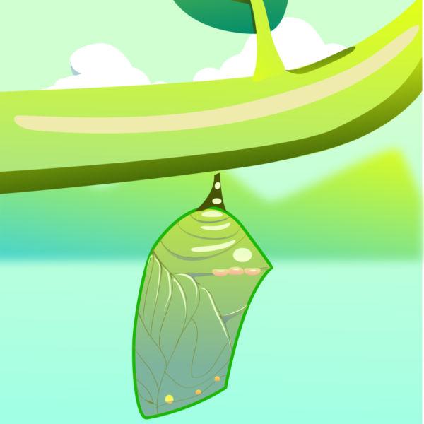 Butterfly cocoon clip art.