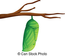 Cocoon Illustrations and Clip Art. 307 Cocoon royalty free.
