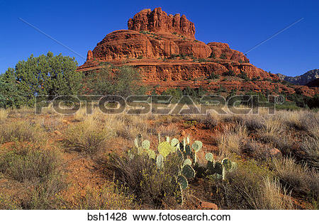 Pictures of Morning light on Prickly Pear Cactus under Bell Rock.