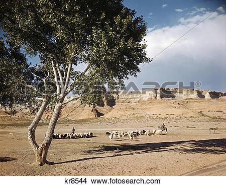 Stock Photo of 1960S Navajo Family Herding Sheep Near Tonalea.