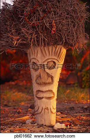 Stock Photo of Coconut palm carved into tiki, Hawaii pbl01662.