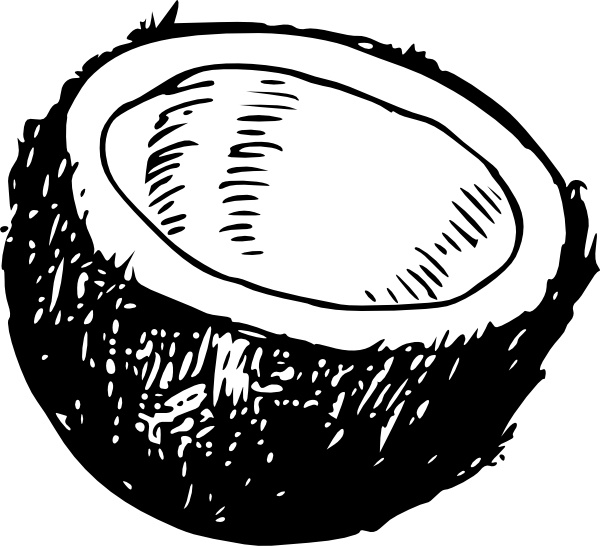Coconut clip art Free vector in Open office drawing svg ( .svg.