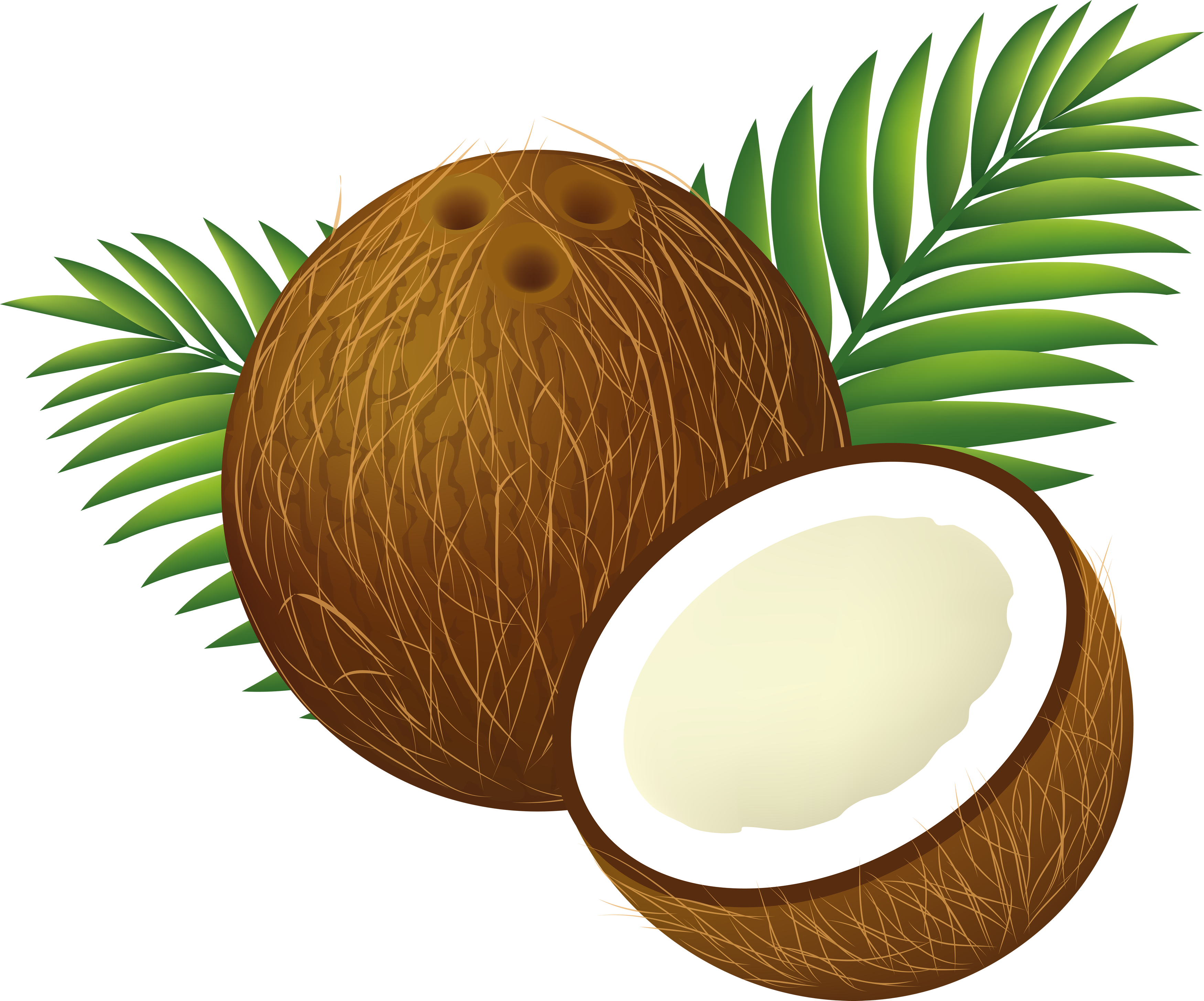 Coconut PNG images free download.