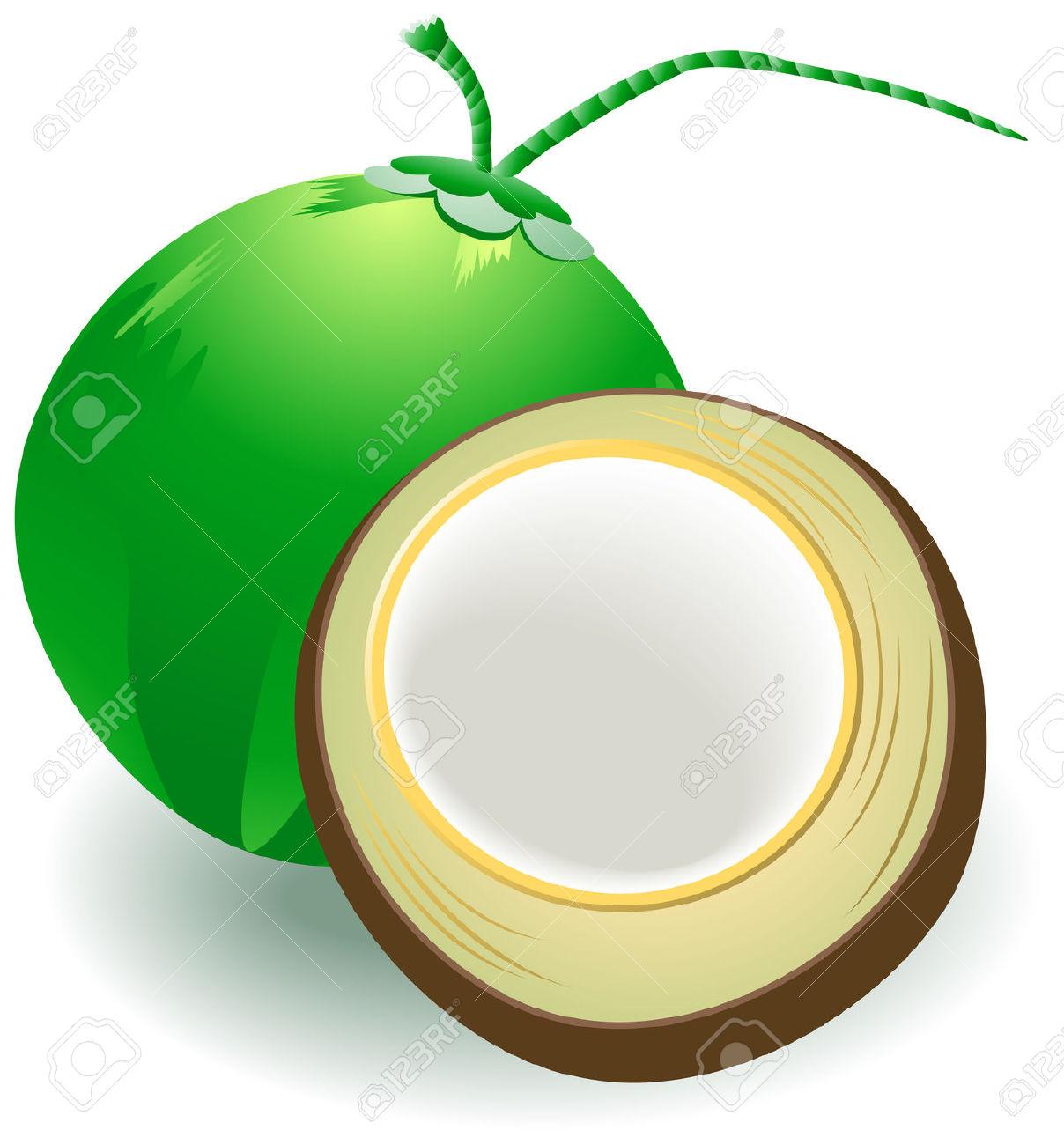 Coconut clipart.