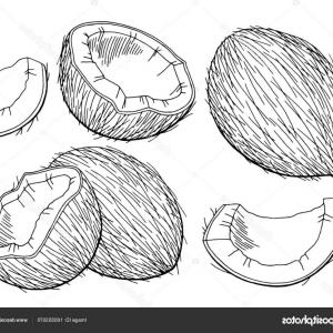 Coconut Clipart Black And White (94+ images in Collection) Page 1.