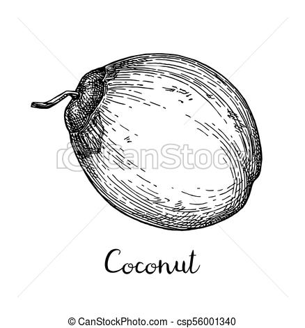 Coconut Clipart Black And White (94+ images in Collection) Page 2.