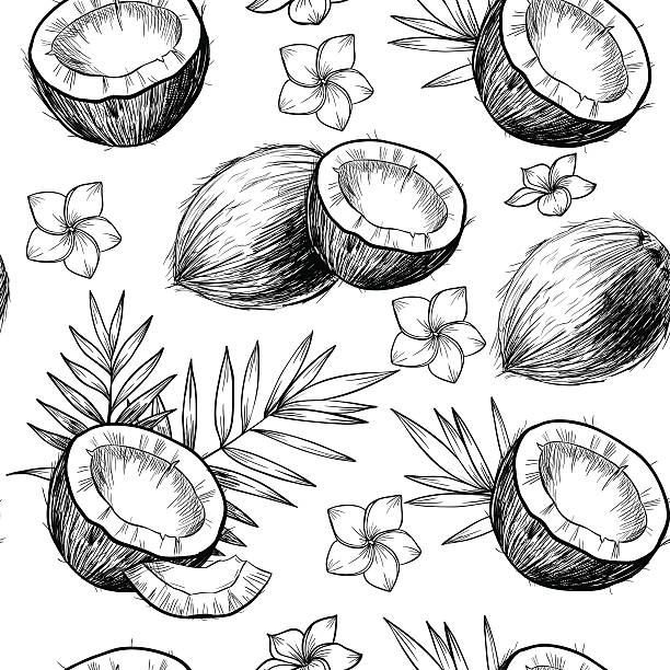Best Coconut Illustrations, Royalty.