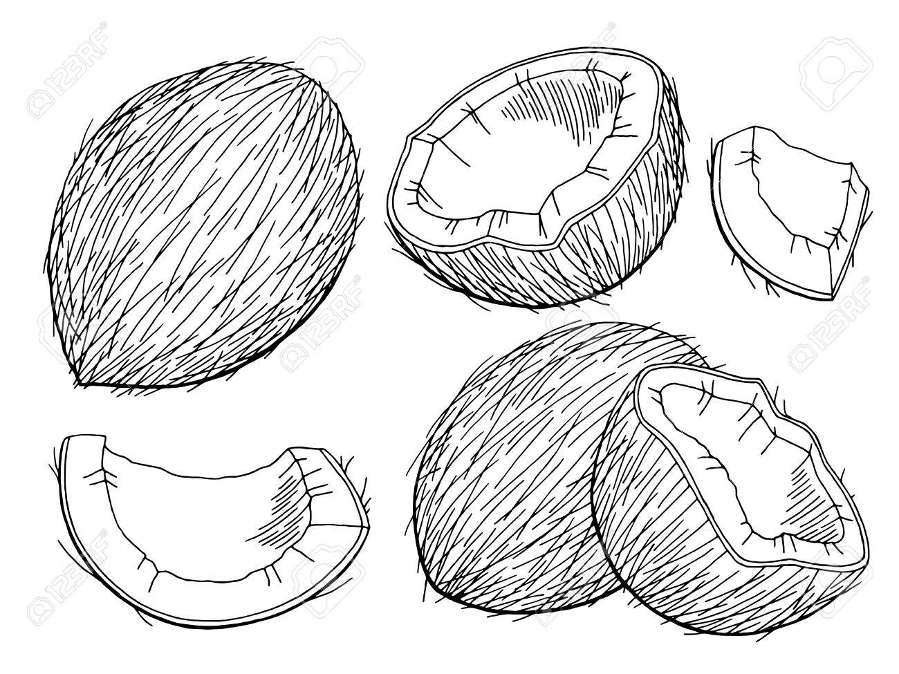 Coconut graphic black and white isolated sketch illustration...