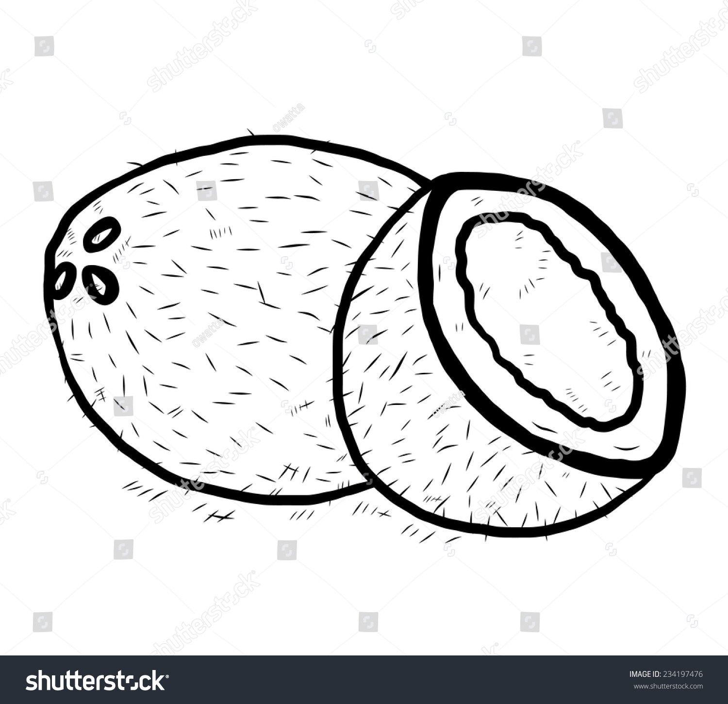 Clipart black and white coconut 3 » Clipart Portal.