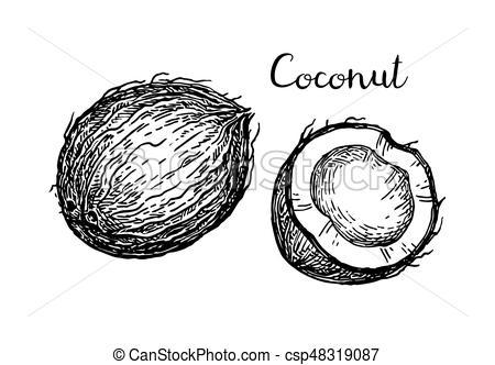 Black and white clipart coconut 8 » Clipart Portal.