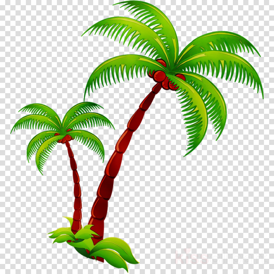 Coconut Tree Cartoontransparent png image & clipart free download.
